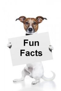 Dog-Facts-For-Kids2