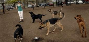 Pooch Etiquette at the Park