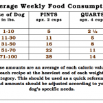 Overweight Pets In America