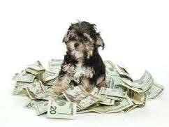 pet cost calculator