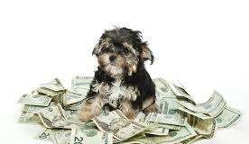 How Much Does that Puppy in the Window Really Cost? Pet Cost Calculator