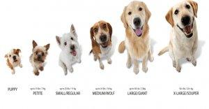 Dog-sizes