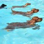 Dog Safety in Swimming