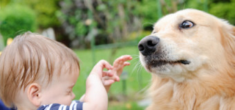 Cynophobia – Fear of Dog