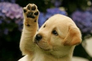 DogPawingWJLT