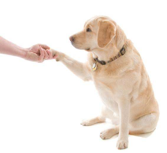 Where To Train Your Dog To Be A Therapy Dog