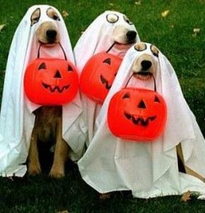 dog-humor-funny-halloween-costumes-2