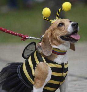 halloween-dogspets-costume5