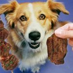 Doggy Diet – Are Dog's Carnivore's?