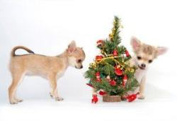dogswithtree