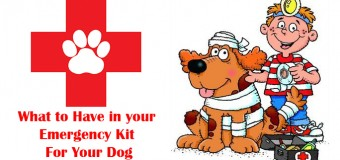Emergency Items Every Dog Owner Should Have On Hand