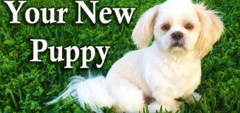 Your New Puppy – Puppy Steps