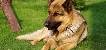 The Best Dogs for Doomsday Preppers