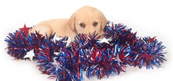 Keep Your Dog Safe This Fourth of July