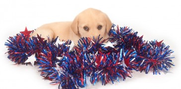 Puppy in fourth of july decorations