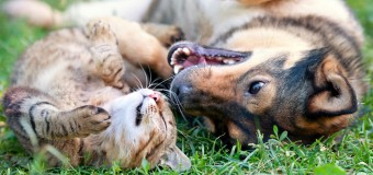 Do Dogs Really Hate Cats?
