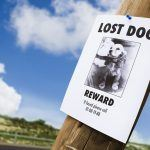 How to Keep Your Dog From Becoming Another Lost Dog Statistic