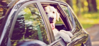 A Wireless Dog Fence: Freedom During Summer Road Trips