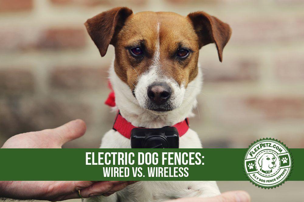 electric dog fences