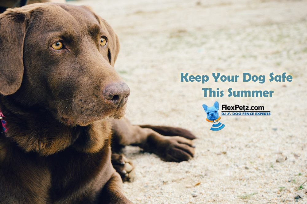 Keep Your Dog Safe This Summer