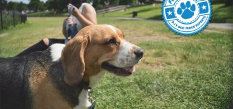 Dogs and Extreme Heat Emergencies