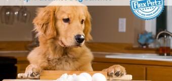 Top 4 Gourmet Dog Bakeries