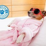 5 Holistic Therapies for Dogs