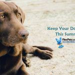 Summer tips for your dogs