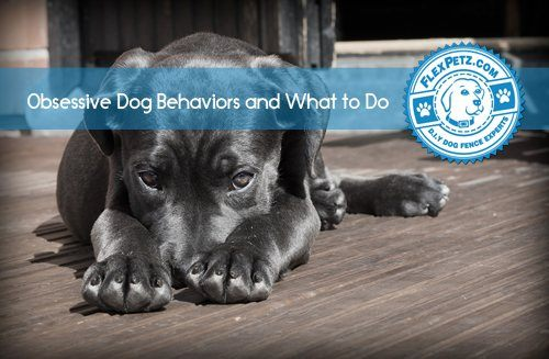 Obsessive Dog Behaviors and What to Do