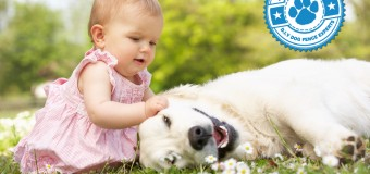 The Happiest Dog Breeds