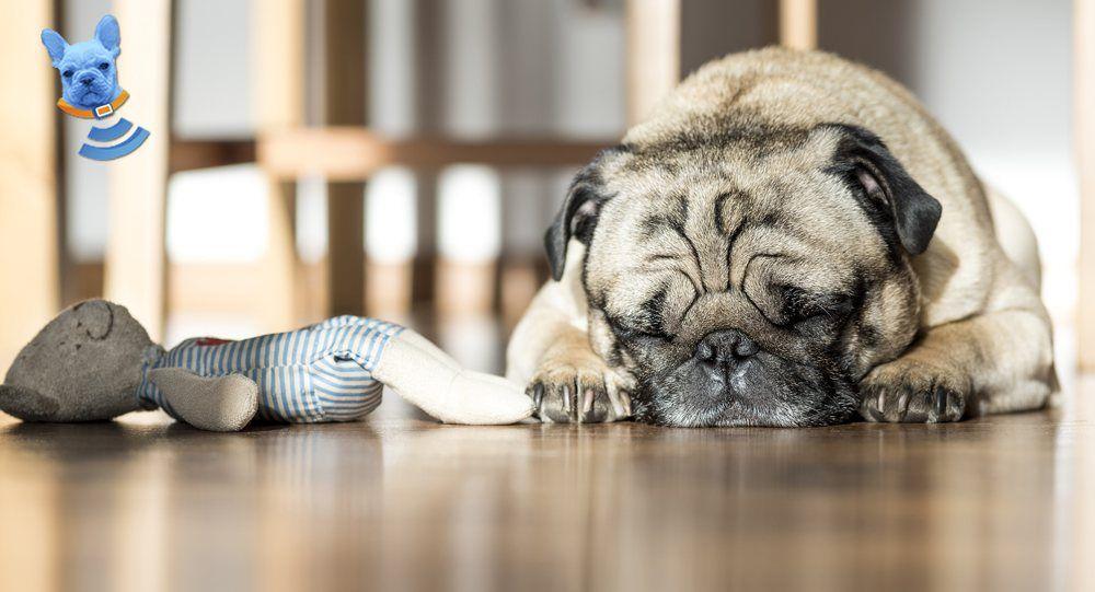 The Sleep Habits of Dogs