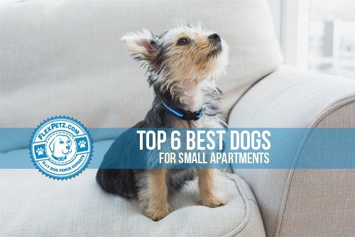 The top best dogs for a small apartment for Best little dogs for apartments