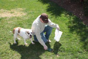 dog-waste-cleanup
