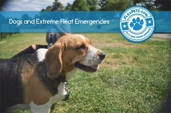 dogs-and-exreme-heat-FB