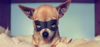 Dogs With Superpowers