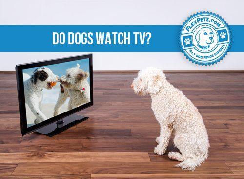 Hund sitzt vor Fernseher