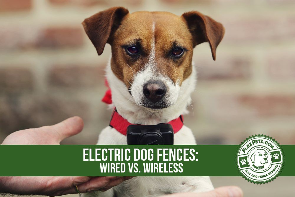 Best Wireless Electric Dog Fence