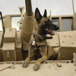 The Canine Soldiers: Dogs in warfare