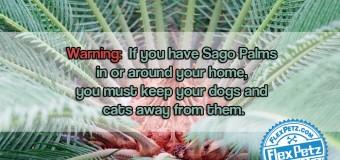 Beware of Sago Palms