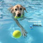 Swimming with Your Dog