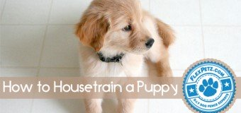 Housetraining a Puppy: Ways & Methods