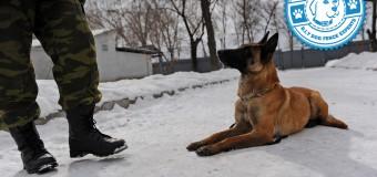 Vet Dogs: Mission K-9 Rescue