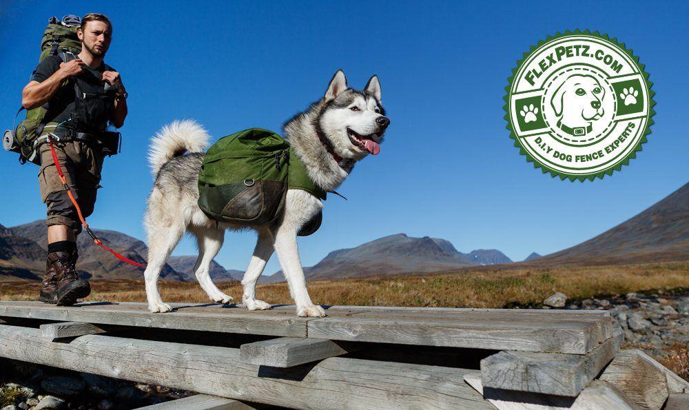 dog-back-packs