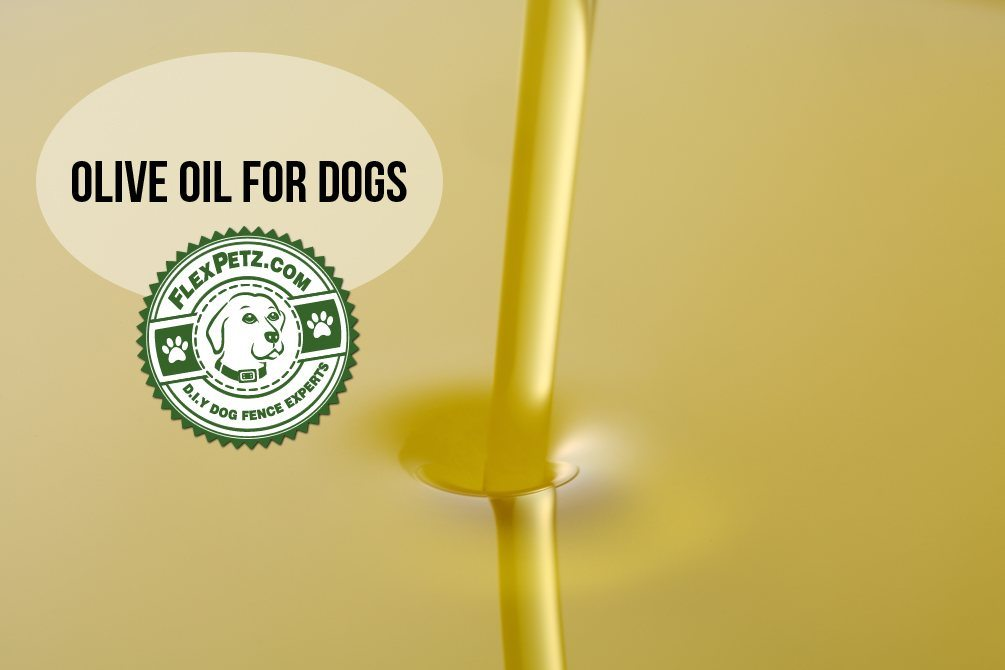 olive-oil-for-dogs