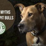 Guest Post: The Top 3 Myths about Pit Bulls