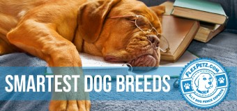 The 5 Smartest Dog Breeds