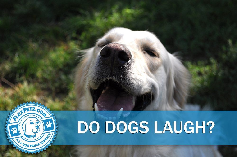 do dogs laugh