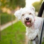 Fun Places to Take Dogs