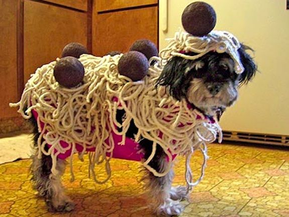 Image credit: : http://www.bluemountain.com/blog/tag/halloween-costumes-for-dogs/