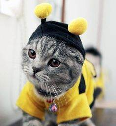 Image credit: https://www.pinterest.com/zentified/kittens-in-costumes/